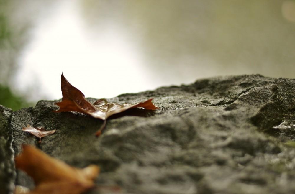 Signs of fall, St. Stephen's Green, Dublin, Ireland